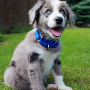 What Is A Good Hypoallergenic Dog Food