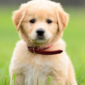 The Most Popular Dog Names Of