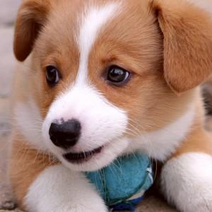 The Most Por Dog Names Of 2017