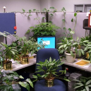 top 10 annoying cubicle pranks zergnet